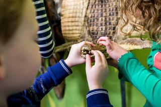 Kinderen voelen aan een van de opgezette dieren in het museum