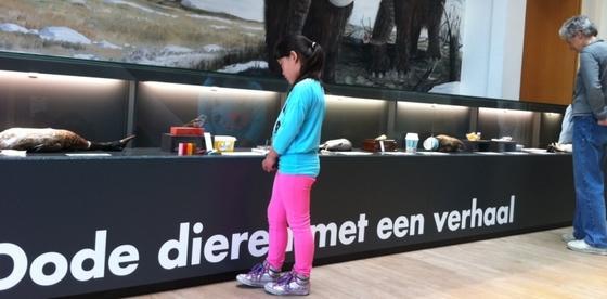 Een meisje staat naar een vitrine te kijken waar in witte letters op een zwarte ondergrond de tekst staat: dode dieren met een verhaal