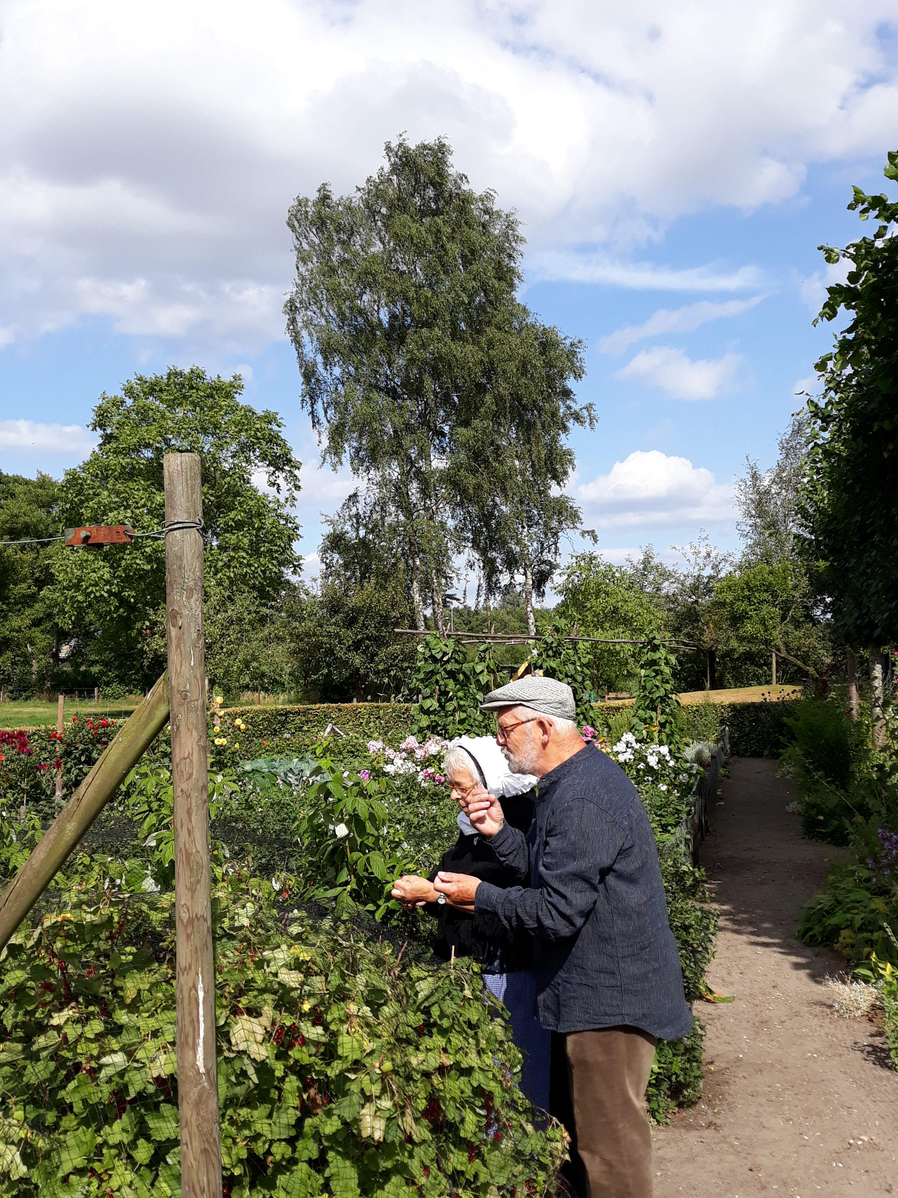 Een oudere man en vrouw in klederdracht staan gebogen over groene planten in de tuin van het museum