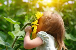 Een klein meisje trekt met haar kleine handjes een zonnebloem naar haar toe en steekt haar gezicht er helemaal in om er aan te kunnen ruiken.