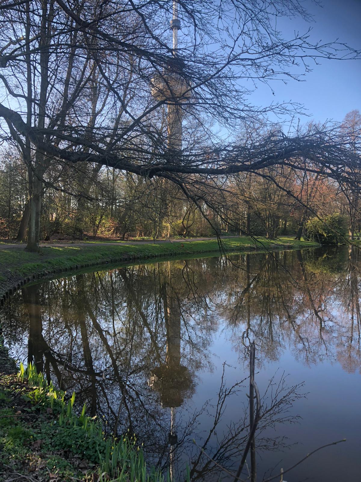 Door de kale bomen van het park is de Euromast nog net te zien. De bomen worden weerspiegeld in het water op het onderste deel van de foto.
