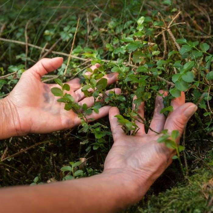 twee open handen, met de palmen naar boven, voelen aan een groen plant met kleine blaadjes.